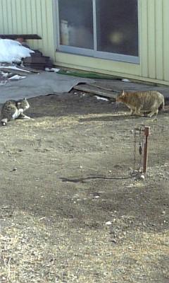 猫サミット開催