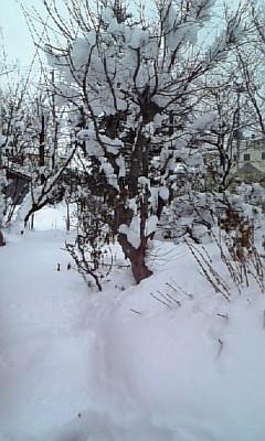 雪かき痛…