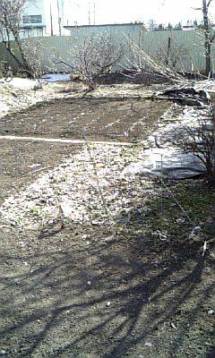 男爵村にも「春」。
