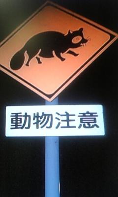 動物横断注意報!