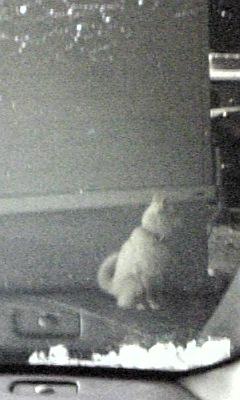 続・半袖少年と白い犬。