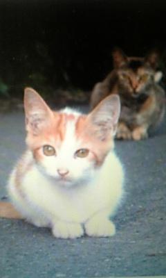 トリビアの猫。