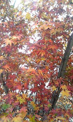 小さい秋みつけた♪