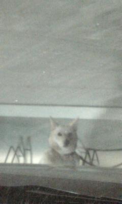半袖少年と白い犬、ふたたび。